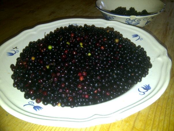 Elderberries.......mmmmmmm