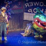 little shop of horrors - t12 - a1stage scenery and set hire for
