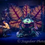 little shop of horrors - t30 - a1stage scenery and set hire for