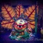 little shop of horrors - t40 - a1stage scenery and set hire for