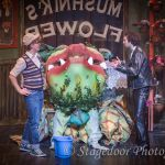 little shop of horrors - t44 - a1stage scenery and set hire for