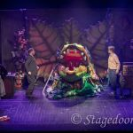 little shop of horrors - t52 - a1stage scenery and set hire for