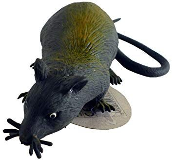 Squishy Rat