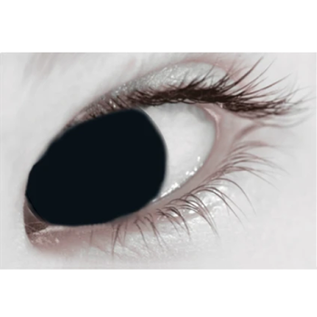 Black Out Contact Lenses (Daily)
