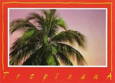 Lorentz Gullachsen - Tropicana V Postcard