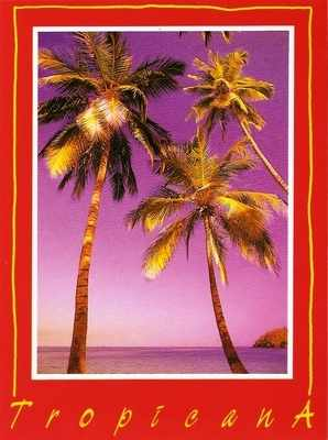 Kris Coppieters - Tropicana I Postcard