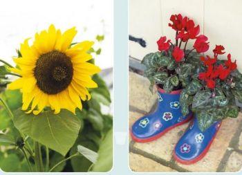 Sunflower boots
