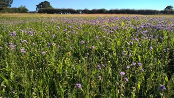 cover crop image