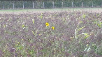 cover crop image 2