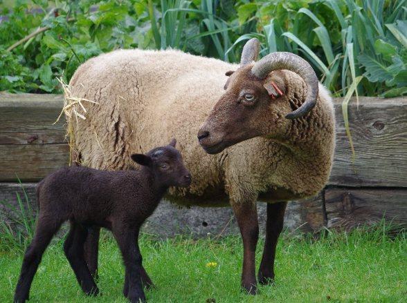 annabelle & lamb 031
