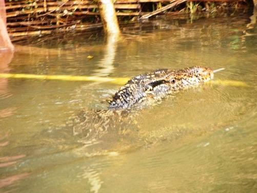 kabaragoya swimming