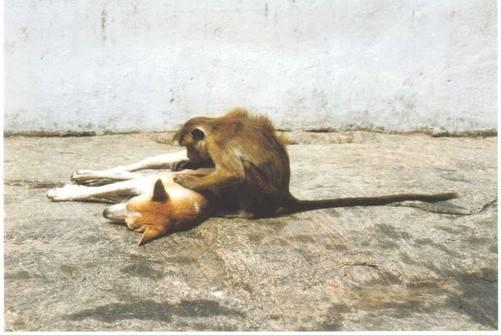 dog monkey