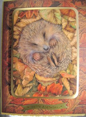 Sleepy hedgehog for Him