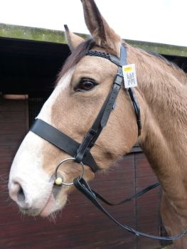 STOCK CLEARANCE Plaited Bridle with Wide Noseband