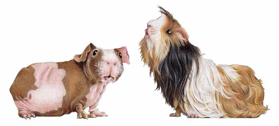 Rachels Piggies