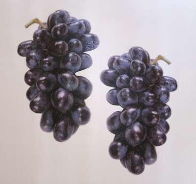 Grapes001-400