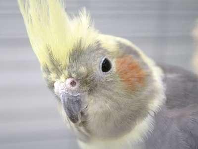 Birds 013-400