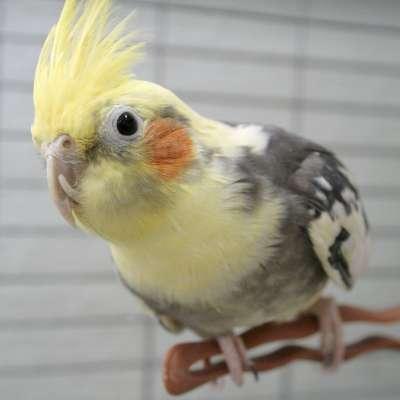 Birds 019-400