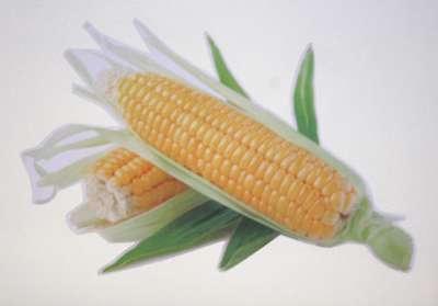 Corn001-400