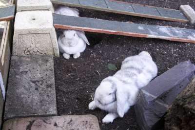 Bunny001-400