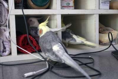 TheBirds025-400