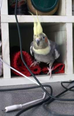 TheBirds034-400