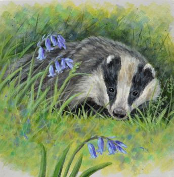 Small Canvas - Badger & Bluebells