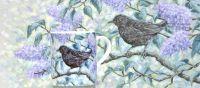 Lilac Blackbird