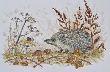 Hedgehog & Snail