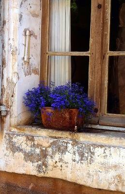 Blue Flower Window Box