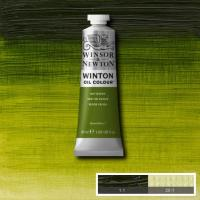 Winton Oil Colour - Sap Green