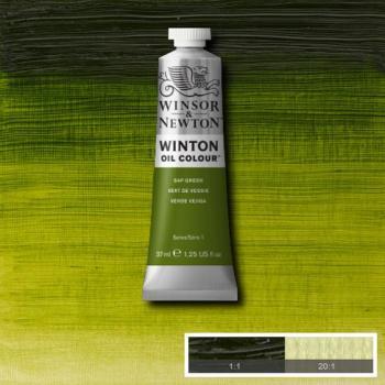 Winton Oil Colour - Sap Green