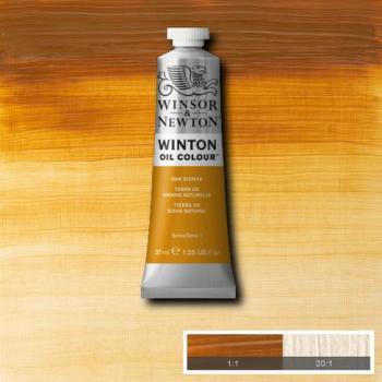 Winton Oil Colour - Raw Sienna