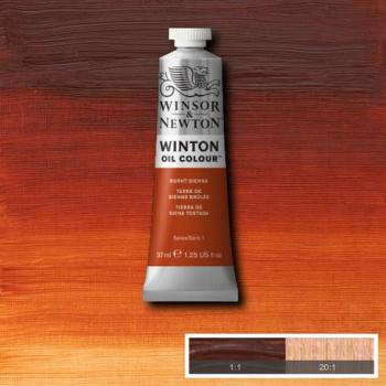 Winton Oil Colour - Burnt Sienna