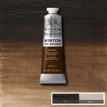 Winton Oil Colour - Raw Umber