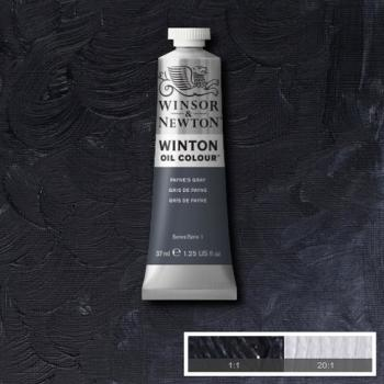Winton Oil Colour - Payne's Gray