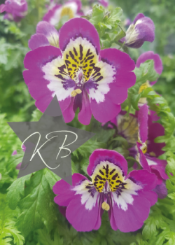 "Floral card - 5 x 7"""