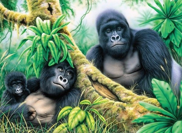 Royal and Langnickel Painting by numbers  : Mountain Gorillas