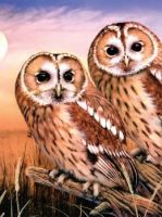 TAWNY OWLS SMALL JUNIOR PAINT BY NUMBERS by R&L