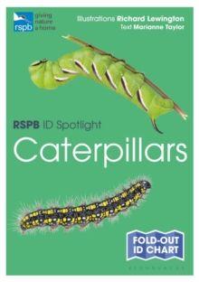 RSPB ID Spotlight - Caterpillars by Marianne Taylor