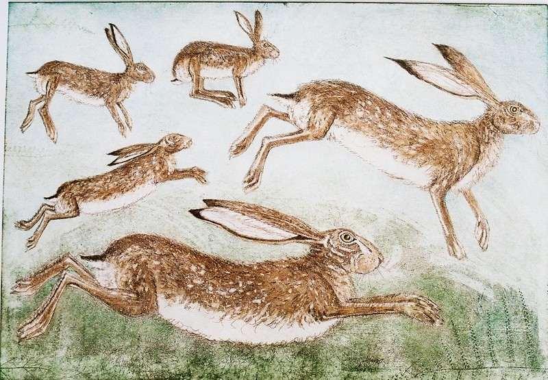 huske of hares etchiing