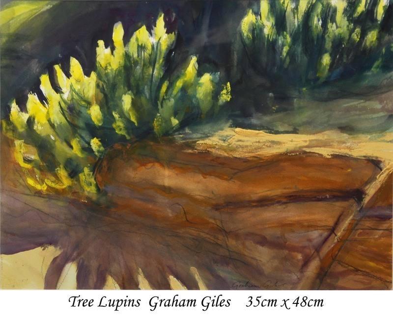 Tree Lupins