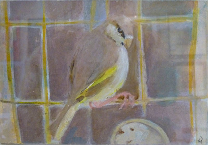The Knowing look of a bird 10cm x 16cm