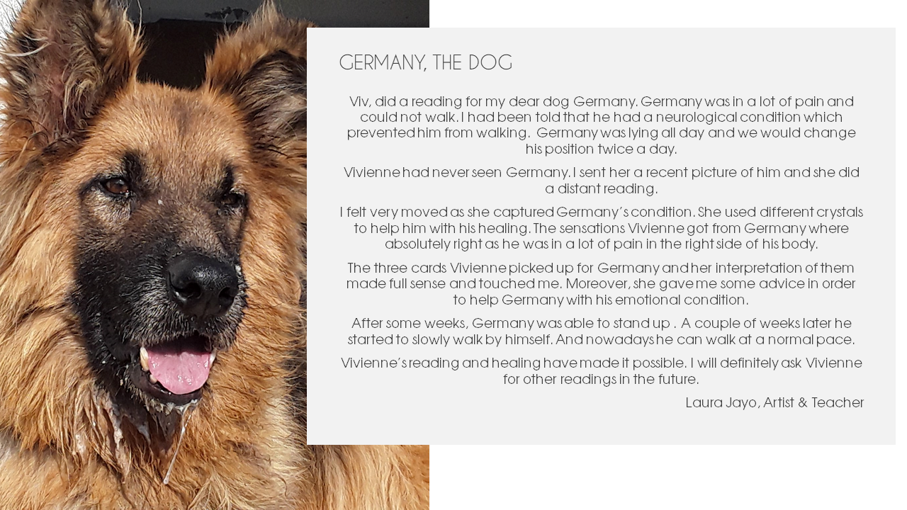 Germany the dog