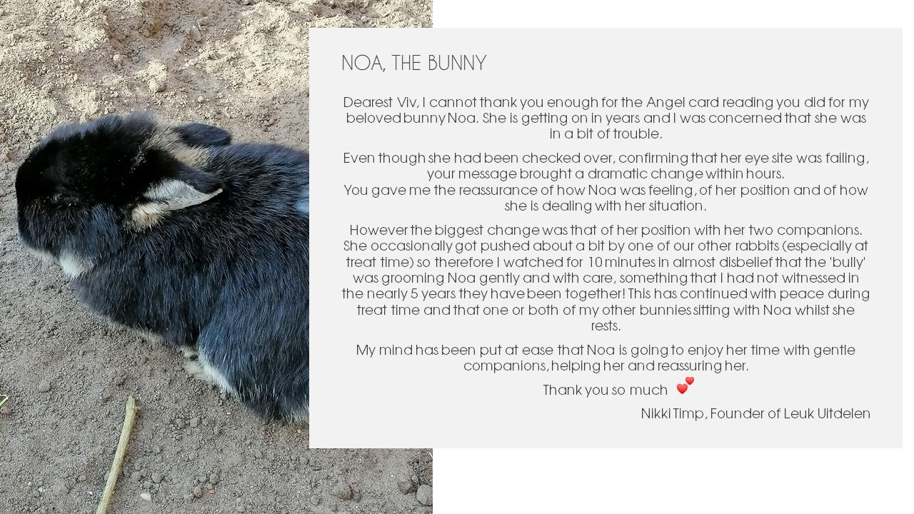 Noa the bunny