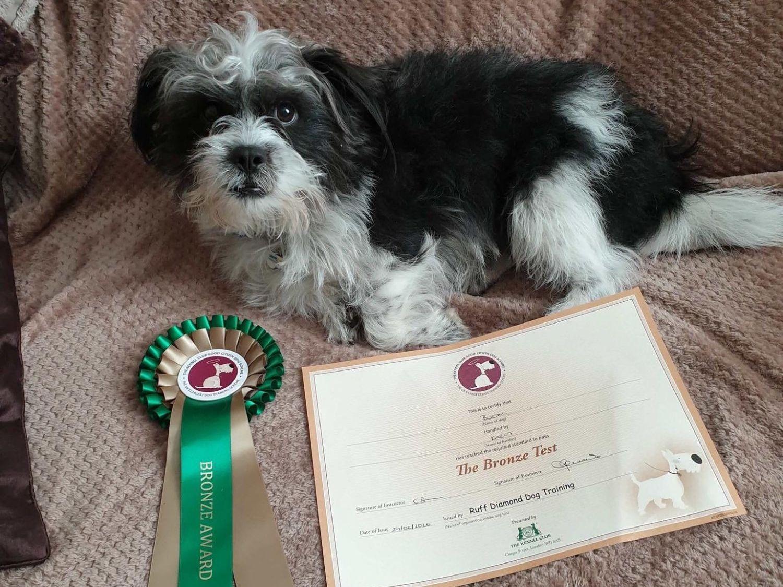 Bronze Good Citizen Dog Scheme