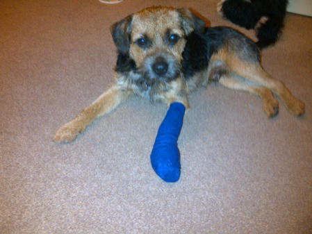 Poorly paw