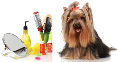 Dog-grooming-photo[1]
