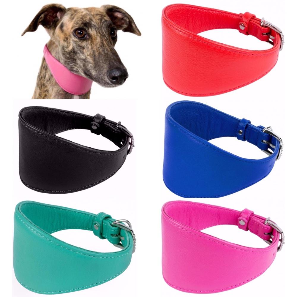 Whippet Grewyhound Collar