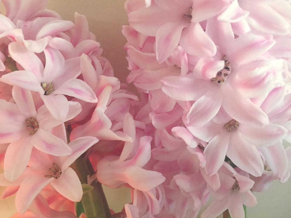 Hyacinth (Pink) Flower Essence